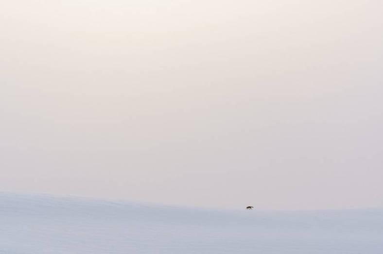 foxes-photography-in-hokkaido-8-900x599