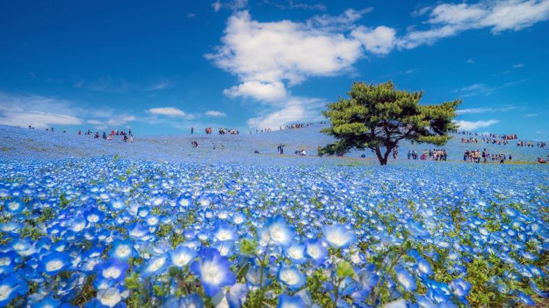 Flower Walk (hana sampo)